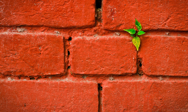 plant growing out of brick wall